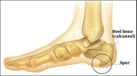 شکل استخوان بندی پا