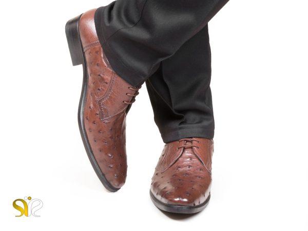 عکس مدل کفش چرم شترمرغ سی سی
